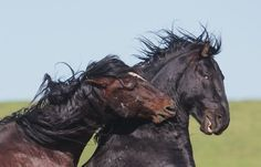 horse photography | Wounded Warriors Photo by Kurt Bowman -- National Geographic Your Shot