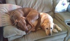 . - Click image to find more Pets Pinterest pins
