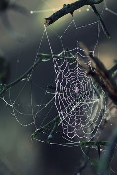 Morning Cobwebs by Rachel