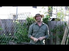 Fruit Growing: How to grow watermelon vines in small spaces - Growing watermelon