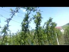 YouTube Fruit Trees, Grape Vines, Gardening, Youtube, Outdoor, Plant, Outdoors, Vineyard Vines, Lawn And Garden
