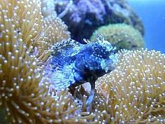 Great Beginner Fish For A Saltwater Aquarium