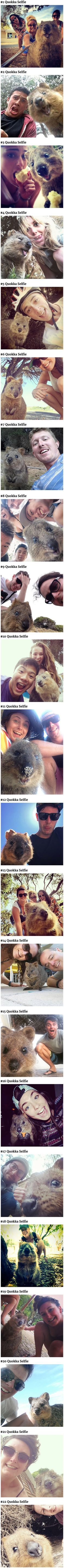 """The Quokka, an irrestistibly adorable and happy-looking rodent native to Australia, is now at the epicenter of what is possibly the cutest trend we've ever seen – the Quokka selfie. Due to their """"vulnerable"""" status in the IUCN Red List, handling these critters is a crime, but they are not afraid of humans and will readily approach them, so taking a selfie with one shouldn't be too difficult."""