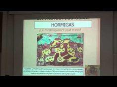 Un proyecTICo sobre hormigas. Jornadas Buenas Prácticas NETQ6 0-6