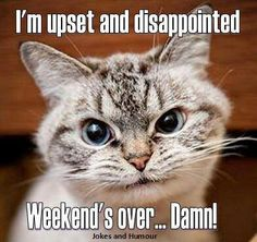 weekend is over quotes quote sunday quotes weekend weekend quotes sunday night Funny Animal Memes, Funny Animal Pictures, Funny Cats, Funny Animals, Cat Memes, Adorable Animals, Funny Images, Monday Quotes, Cat Quotes