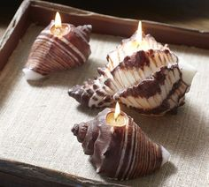 I love seashells and I love candles and with these two put together it is a bit of heaven.