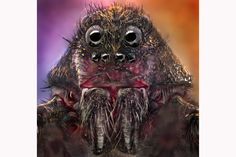 Beautiful! Photographer Jorge Fardels uses macro photography to make extreme close-up portraits of #spiders.