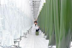 In welchen Bereichen forscht der Auftraggeber des Forschungs-/Innovationszentrums? Welche fehlen? Wo könnten neue inhaltliche Schwerpunkte entstehen? Farm Business, Green Business, Giant Steps, Spaceship Interior, Diy Tech, Vertical Farming, Industrial Park, Innovation, Easy Paper Crafts