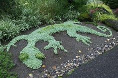 Yep - It's a gecko and it's made out of succulents!