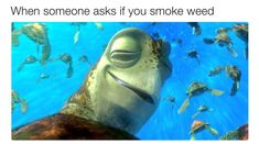 Hot topics, interesting posts and up to date news Funny Weed Memes, Weed Jokes, 420 Memes, Weed Humor, Funny Shit, Cannabis Wallpaper, Stoner Humor, Happy 420, Weed Art
