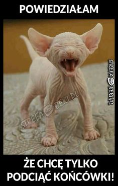 Doesn't this poor hairless cat look like Voldemort? Baby Animals, Funny Animals, Cute Animals, Cat Memes, Funny Memes, Happy Tree Friends, English Fun, Sphynx Cat, Cat Care Tips