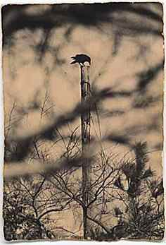 Masao Yamamoto,  A box of Ku #115 crow on pole