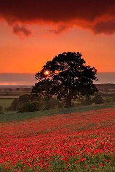 Sunset over flower fields