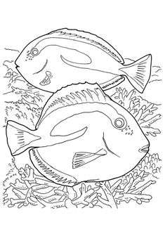 Blue Tang Fish Coloring Page Blue Tang Fish Coloring Page. Blue Tang Fish Coloring Page. Blue Tilapia Coloring Page in fish coloring page Parentune Free Printable Coral Coloring Pages Coral Ocean Coloring Pages, Fish Coloring Page, Animal Coloring Pages, Coloring Pages To Print, Coloring Book Pages, Printable Coloring Pages, Coloring Pages For Kids, Coloring Sheets, Great Barrier Reef