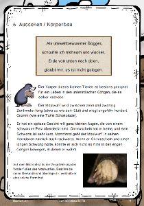 Neue Lesetexte für die 1 bis 6 Klasse  němčina