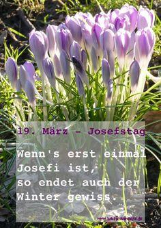 19. März ist Josefstag Josefi Joseftag Josefitag allen Bauernregeln zu Folge, endet nun der Winter endgültig und wenn Josefi schönes Wetter ist, gibt es ein gutes Erntejahr - Honigjahr