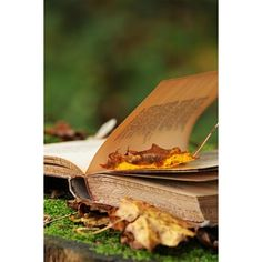 Sanctuary, somewhatvintage: (via Pinterest) ❤ liked on Polyvore featuring backgrounds, photos, pictures, autumn and books