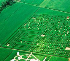 edouard francois: labyrinth - 'moquette maquette'