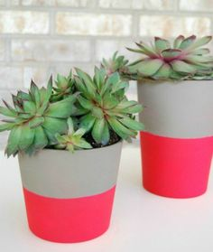 6 DIY Desert Plant Projects For The Home