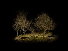 Magical landscapes and enchanted forests by Ellie Davies - Bleaq Choice Of Games, Foster Home For Imaginary Friends, Led Light Design, Over The Garden Wall, Night Photos, Landscape Photography, Forest Photography, Conceptual Photography, Land Art