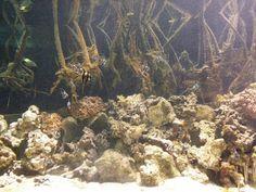 Corals @ Scripps Institute San Diego Beach, Painting, Art, Art Background, Painting Art, Kunst, Paintings, Gcse Art