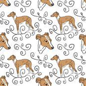 Italian Greyhound Elegance
