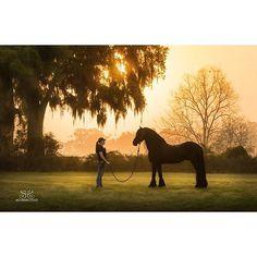 Big Rock Equestrian Center. Carisbrookes El Dante. Photo by #stunningsteeds #friesian #friesianhorse #friesianstallion #horse #stallion #horse #horsesofinstagram #dressagehorse #dressage #champion #cheval #cheriprill #horsephotography #horsephotographer #equinephotography #equinephotographer #equestrianphotography