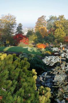RHS Wisley trees saved from A3 widening