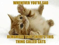 Cats - Good for the Sad