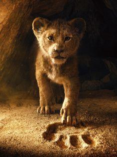 Les 416 Meilleures Images De Lion Et Lionne En 2019