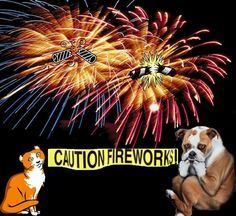 Fourth of July-pet safety Funny Dog Photos, Funny Dogs, Fourth Of July Pics, July 4th, Healthy Pets, Fireworks, Your Pet, Wednesday, Safety