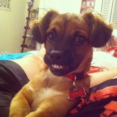 This awkwardly adorable smile that melts hearts at a moment's notice. | The 40 Most Awkward Dogs Of 2013 @Mona Ascha Davila-Swope