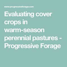 Evaluating cover crops in warm-season perennial pastures - Progressive Forage