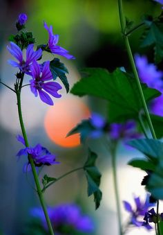 Spring Bokeh – Amazing Pictures - Amazing Travel Pictures with Maps for All Around the World