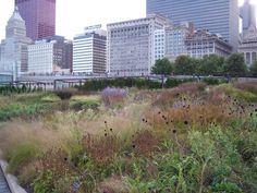 designing gardens for museums - Google Search