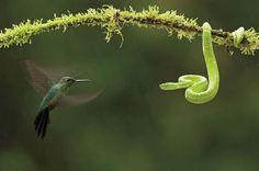 https://flic.kr/p/LT2ydU | Eric Schames | Wildlife Photography Award | Conservation Photographer of the Year
