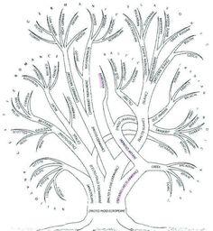 Drzewo genealogiczne języków indoeuropejskich
