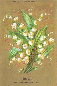 Lilly of the valley * Muguet * mai * Porte-Bonheur Images Vintage, Vintage Cards, Vintage Postcards, Victorian Flowers, Vintage Flowers, Botanical Flowers, Botanical Prints, Decoupage, 1. Mai