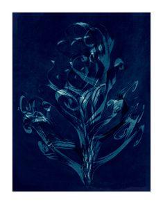 a reworked Blossfeldt photograph courtesy ofthe Rijksmuseum, Amsterdam Amsterdam, Photograph, Painting, Inspiration, Image, Art, Photography, Biblical Inspiration, Craft Art