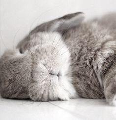 ♥ Pet Rabbit Ideas ♥ Sleeping bunny rabbit