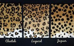 One Room Challenge, Week #2 - My hunt for animal print carpet for stair runner. Final three choices: leopard, cheetah and jaguar | OMG Lifestyle Blog