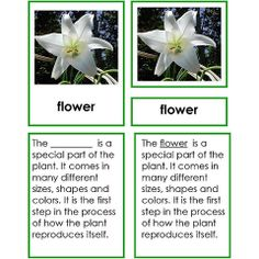 Spring is just around the corner. This five part set includes detailed descriptions, and colorful photos and label cards of the different parts of a flower.