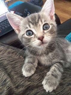 That face! #Cute