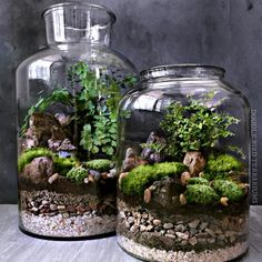 Since posting a photo of the terrarium in the back I have had so much positive feedback. So I've made a slightly smaller version (shown in…