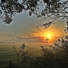 Moin vom Meer der Sonnenaufgang kann im Nebel verdammt viel.  #fogporn #sunrise #steinhude #steinhudermeer  #runkeeper #5k  #nature #sky #sun #tree #beauty #light #cloudporn #weather #photooftheday  #green #skylovers  #weather #mothernature #colorporn