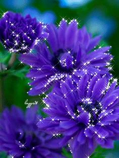 "The flowers are gorgeous! I love the "" glitter"" effect, that is so wonderful to watch! Check it out!."