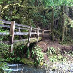Marymere falls loop, washington Olympic national forest. Pictures don't justify. Pic taken 4/29/12 by Lacey Schwegler