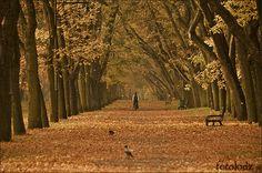 Lodz, via Flickr