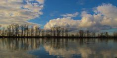 Looking across the Fraser River, Burnaby Foreshores Park.
