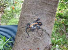 Living Art Mosaics Gecko. By Claudia Williams. FUN IDEA!